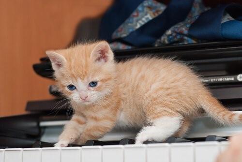 10 Vorteile eine Katze zu Hause zu haben - Katze auf Piano