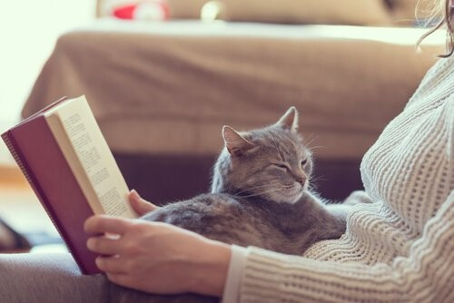 10 Vorteile, eine Katze zu Hause zu haben
