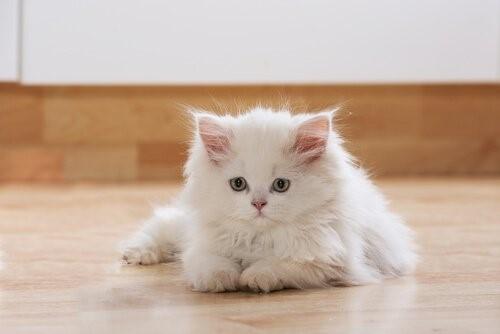 10 Vorteile eine Katze zu Hause zu haben - entspannte Katze