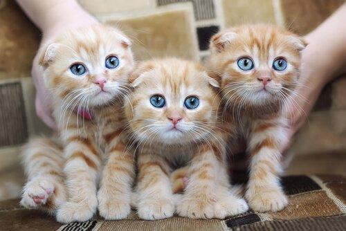 Allergie auf Katzen: Ursachen, Symptome und Vorsorge