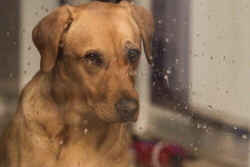 Der Regen und sein Geräusch - Hund am Fenster