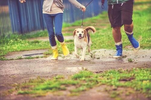 Der Regen und sein Geräusch - Spaziergang im Regen