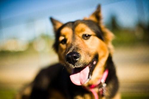 Hundeschnauze: Alles, was es über sie zu wissen gibt