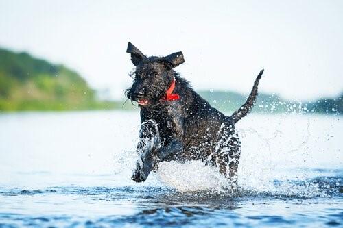 Die sportlichsten Hunderassen