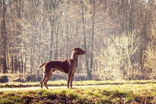 Hunde der FCI Gruppe 7 aus England und Irland