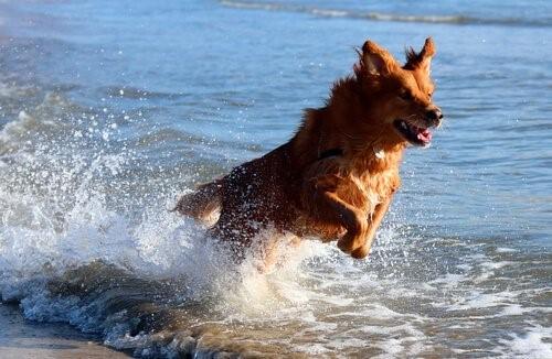 Grundregeln um den Hund an den Strand mitzunehmen - Hund am Strand