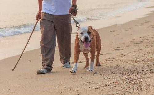 Grundregeln um den Hund an den Strand mitzunehmen - Spaziergang am Strand