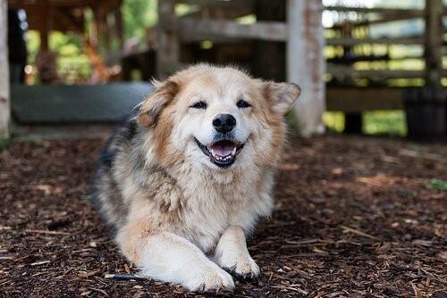 Was ist Hüftdysplasie bei Hunden und wie wird sie behandelt?