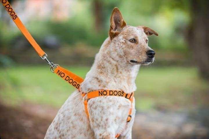 Verschiedene Halsbandfarben für deinen Hund.