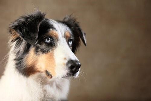 Hat dein Hund die Fähigkeit, dich zu täuschen?