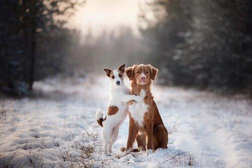 Achtung! Zwinge niemals deinen Hund, auf zwei Beinen zu gehen