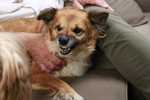Warum dein Hund diejenigen abweist, die schlecht zu dir sind