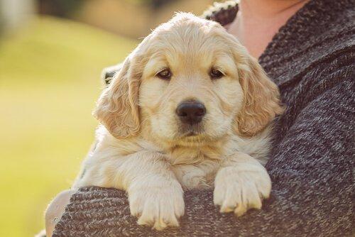 Dou Dou: ein Hund auf zwei Beinen