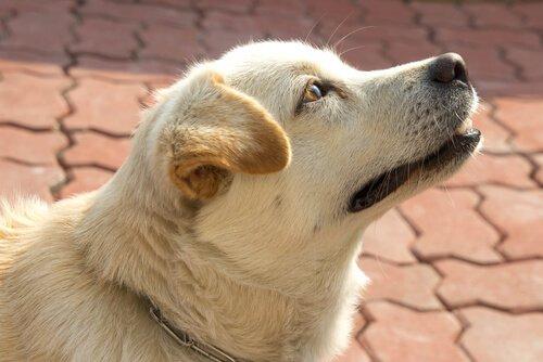 Wissen Hunde die Zeit? Ja, durch ihre Nase!