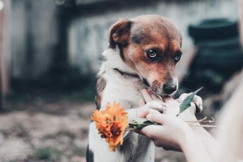 Hunde, die ihre Besitzer hassen - Liebevoller Hund