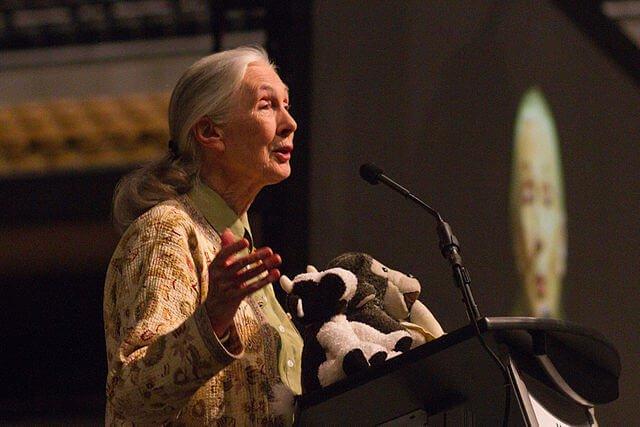 Wer ist Jane Goodall?