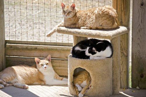 Was tun, wenn die Katze ihren Kratzbaum nicht benutzt?