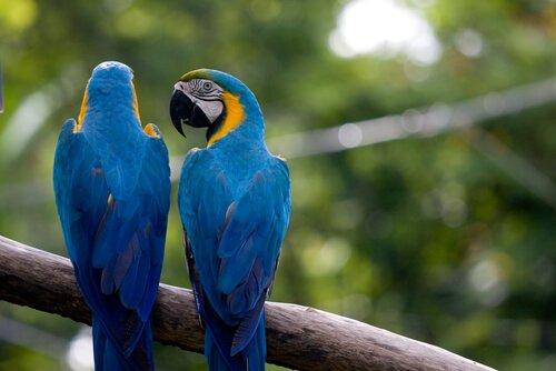 Papageien können sprechen