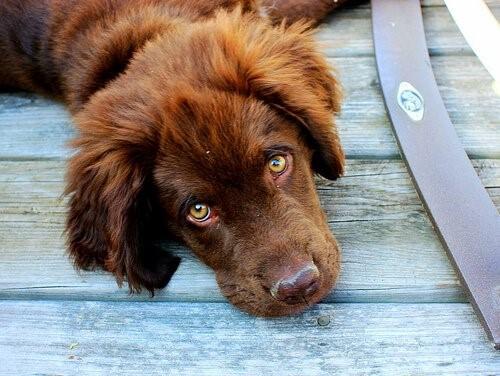 Parodontitis bei Hunden - Hund liegt auf Holz