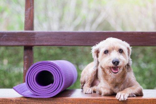 Präventivmedizin für Haustiere