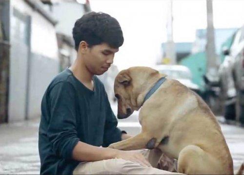 Ein Junge gibt Straßenhunden die erste Umarmung