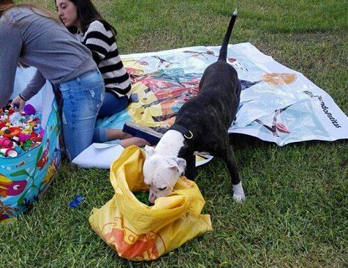 Recycling und Tierhilfe vereint