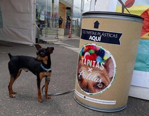 Aktion Tierhilfe: Tapitas x Patitas