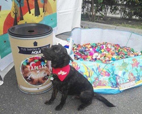 Recycling für die Tierhilfe!