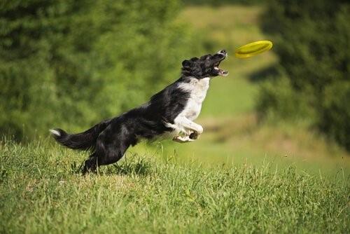 Vertrauen deines Hundes zu gewinnen - Hund fängt Frisebbe