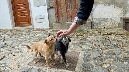 6 Tipps um das Vertrauen deines Hundes zu gewinnen