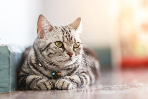 Viruserkrankungen bei Katzen können tödlich sein.