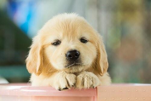 Was kann ich tun, wenn mein Hund traurig ist - Welpe in Box