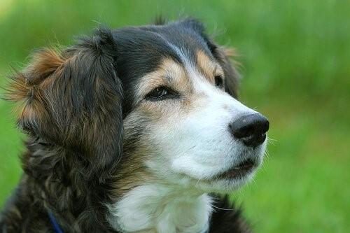 Wie man einen Hund vor dem Ersticken rettet