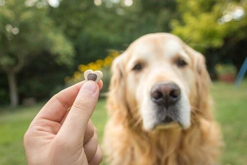 Dominante Hunde - Erziehung und Belohnung