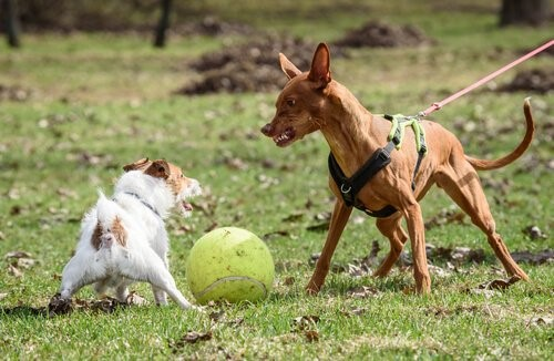 Wie verhinderst du aggressives Verhalten bei deinem Hund - Hund verteidigt Ball