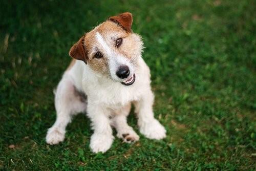 Zehn Tipps für einen ausgeglichenen Hund - Glücklicher Hund