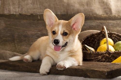 Zehn Tipps für einen ausgeglichenen Hund - Welpe