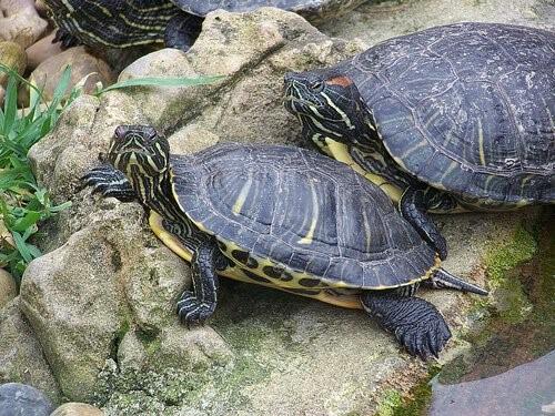 Zucht und Pflege von Schildkröten