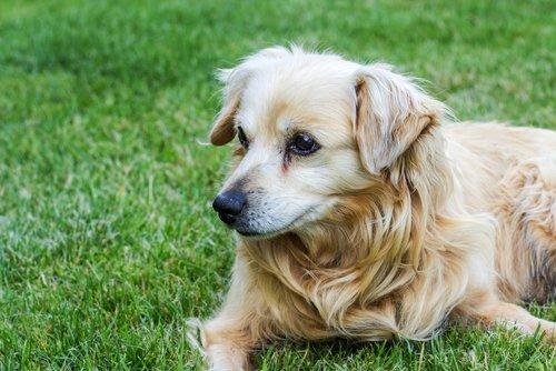 Ältere Hunde brauchen manchmal mehr Pflege
