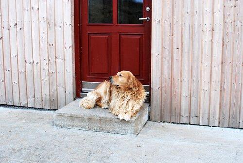 Airbnb für den Hundeurlaub