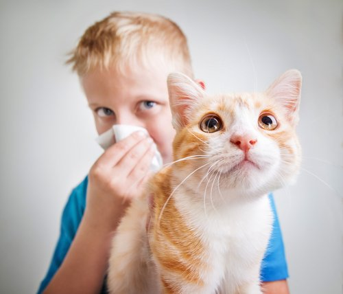 Kind hat Allergie auf Katzen