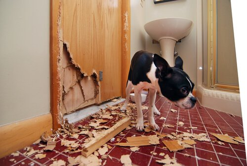 Für manche Hunde ist das Allein Bleiben sehr stressig.