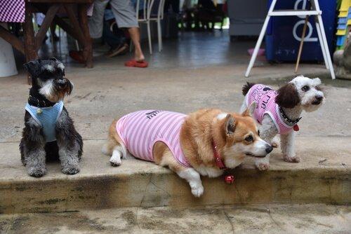 7 außergewöhnliche Mischlingshunde zum Verlieben
