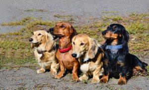 Außergewöhnliche Mischlingshunde gibt es aus ganz unterschiedlichen Rassen.