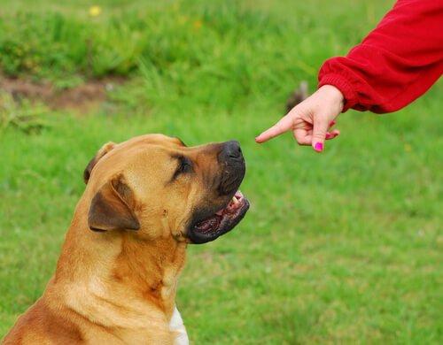 Auch ein gehörloser Hund braucht sein Grundtraining.