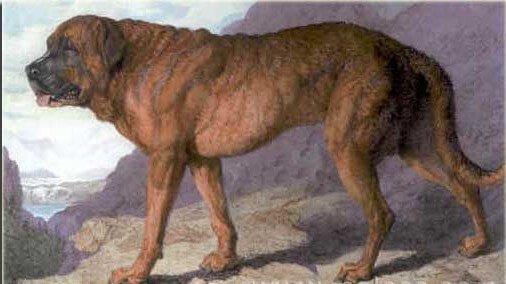 Ausgestorbene Hunderassen
