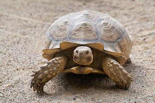 Das Alter einer Schildkröte - so kannst du es ermitteln!