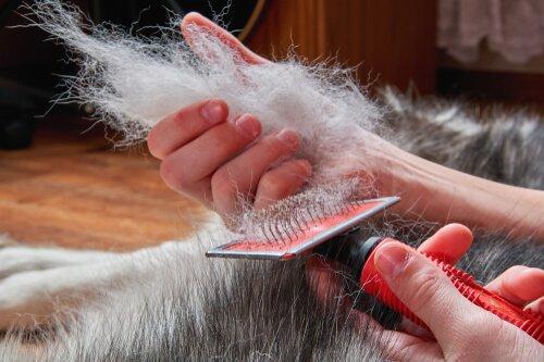 Das Fell meines Haustieres muss regelmäßig gebürstet werden.