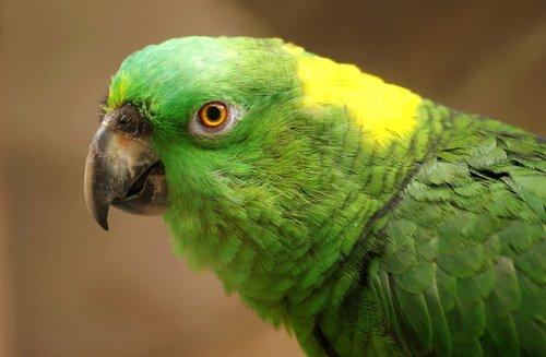 Depression bei Papageien: Ursachen, Symptome und Behandlung