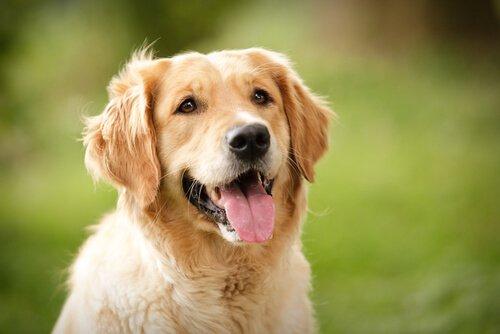 Was bedeutet der Gesichtsausdruck von Hunden?